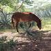 Mule by _minette