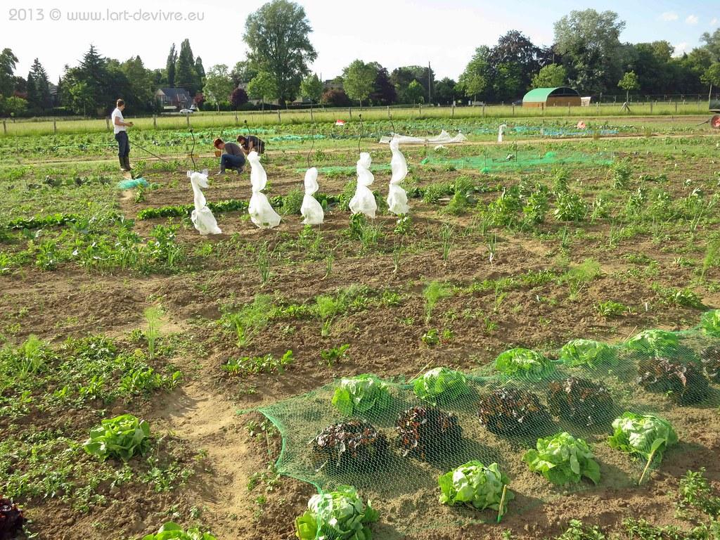 Gemüsegarten 2013