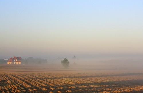 morning mist field sunshine fog sunrise day poland kroczewo