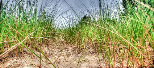 Through the dune grass and to the beach