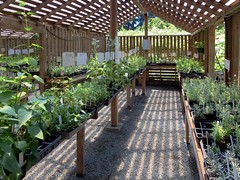 Hazelwood Herb Farm