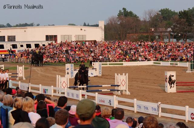 blogi horse