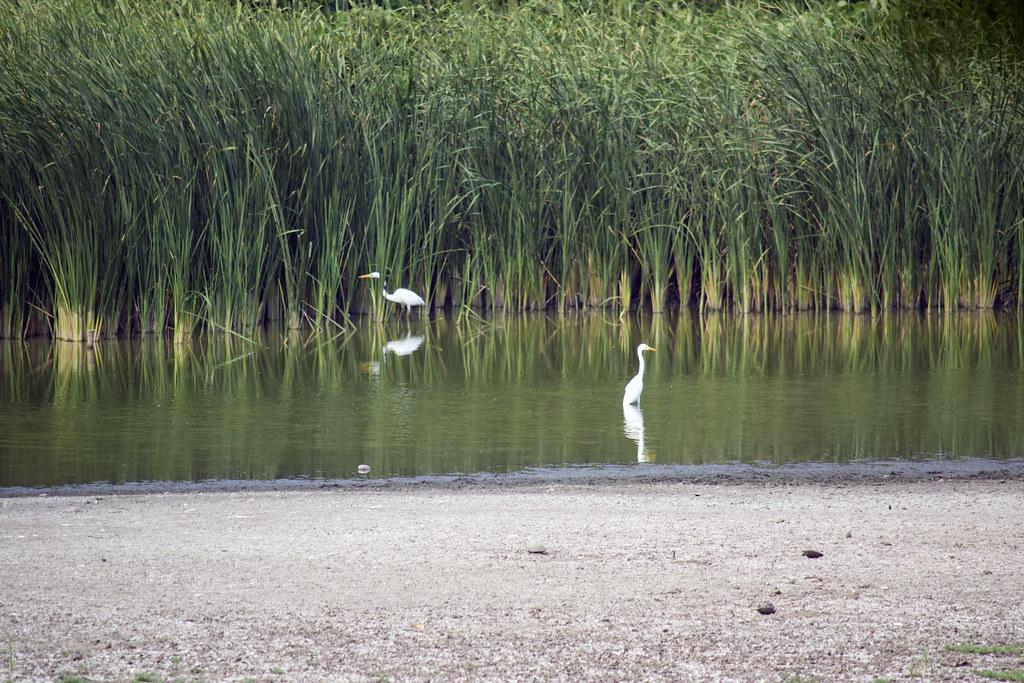 鳥さん 淡水池