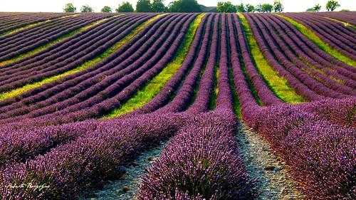 landscape provence francia paesaggio provenza luglio lavanda coloreviola bestofblinkwinners