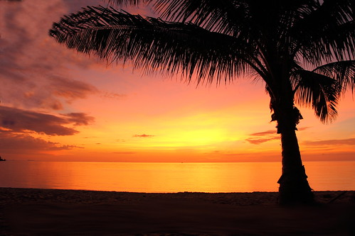sunset sun tree thailand island palm phangan