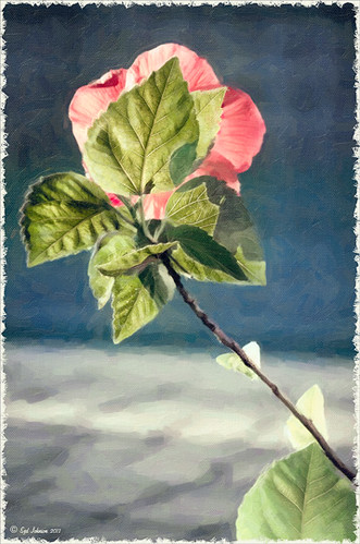 Chinese Hibiscus flower image taken from back and using Snap Art
