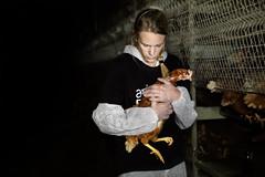 Salvataggio di 6 galline ovaiole da un allevamento all'aperto