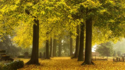 Golden Woods - Autumn 2012