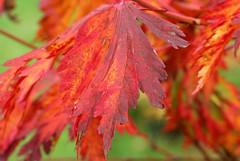 Autumn colours - UK