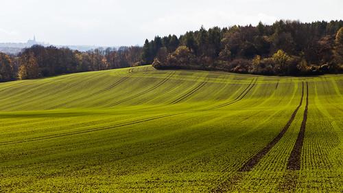 autumn light shadow color green field leaves canon germany deutschland thüringen herbst thuringia blätter bunt ef24105mmf4lisusm canoneos5dmarkii