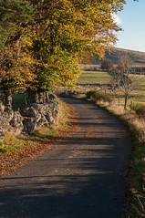 Couleurs d'automne près de Malbouzon