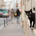 Parisian Puss by tape the escape