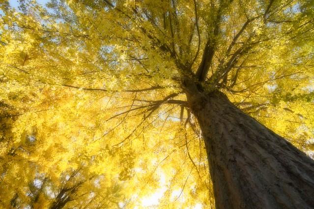 写真_Yellow_Sky
