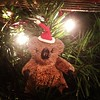 Our Christmas Koala is up on the tree.