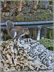 Bayfront Park Squirrel
