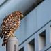 The Urban Bird by Ken-ichi