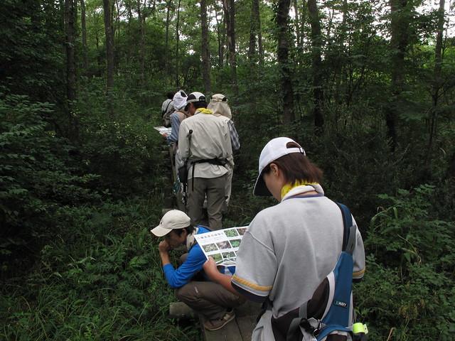 水口谷湿原では「散策マップ」を使って植物を確認.