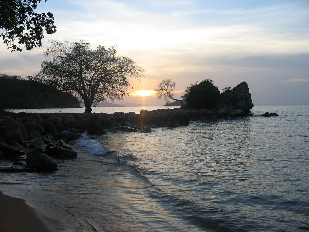 1. La roca, el árbol y el sol. Autor, Yasmary