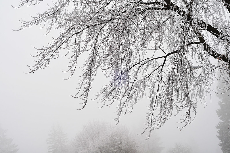 ice and fog
