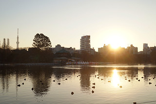 Sunrise on New Year's Day at Shinobazu Pond