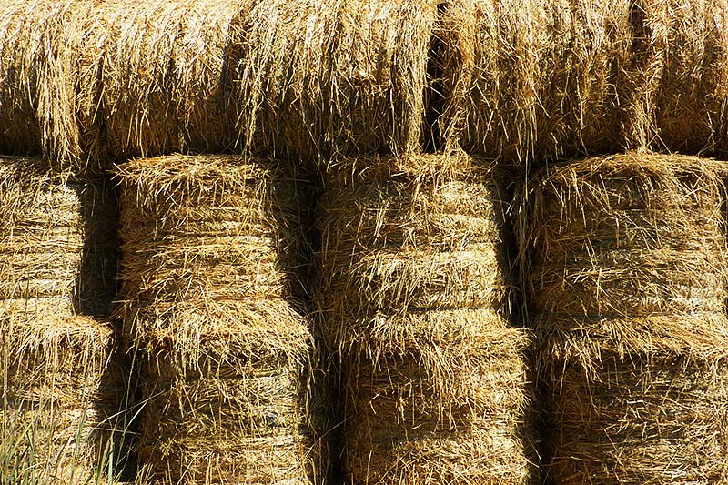 Hay Bales in Quilchena, Nicola Valley, Thompson Okanagan, British Columbia
