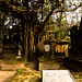 South Park Street Cemetery-51