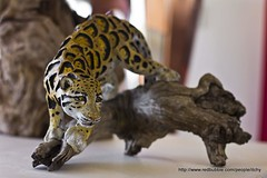 animal, mammal, jaguar, fauna, cat-like mammal, ocelot,
