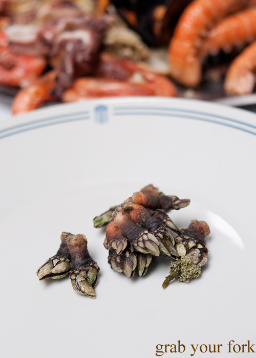 Percebes goose barnacles from O Paladar seafood restaurant, A Coruna, Galicia, Spain