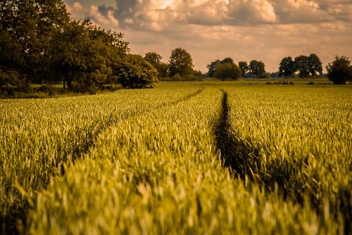 Field in Hemsbach