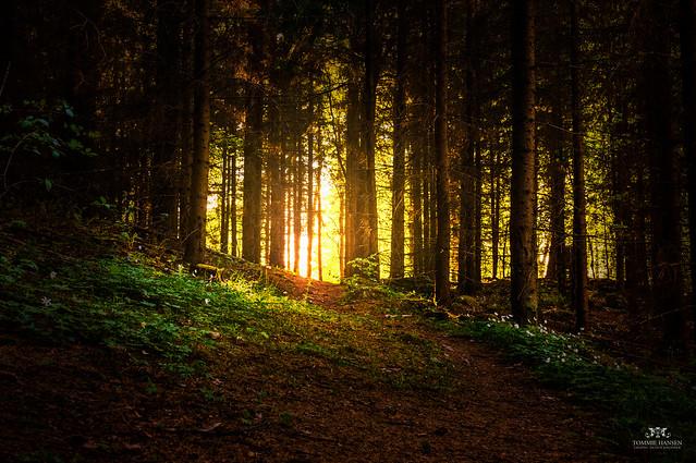 Light and forest at Isblandskärret, Djurgården (Stockholm/Sweden)