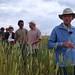 Bernard Ronot, visite de la plate-forme de blés anciens à Fromenteau (Côte d'Or)