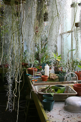 18_greenhouse_workspace