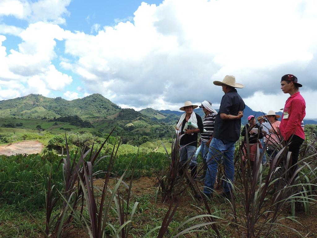 Grupo de ganaderos visitando banco mixto de forrajes