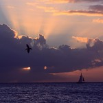24. November 2016 - 19:27 - Sunset ~ Thanksgiving Day  ~ Key West, Florida U.S.A.  Pelican in-flight  ~ Historic Key West Harbor ~ Florida Keys  [I can usually completely capture a sunset from start  to finish in about 6 images... This sun-peek is #5. lol]  (four more photos 'from this night' in the comments)  en.wikipedia.org/wiki/Key_West,_Florida  en.wikipedia.org/wiki/Florida_keys