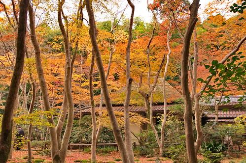 【写真】2012 紅葉 : 祇王寺/2021-09-05/IMGP7855