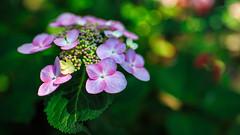 A Floral Bokeh