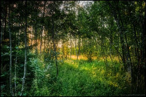 trees light tree green nature grass forest suomi finland landscape bush path led trail skog twigs hdr stig träd pietarsaari gräs jakobstad pedersöre österbotten ostrobothnia 7ex1ev