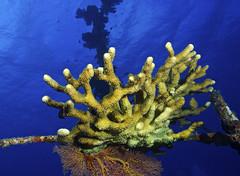 Beqa Adventure Divers - 11 Aug. 2013