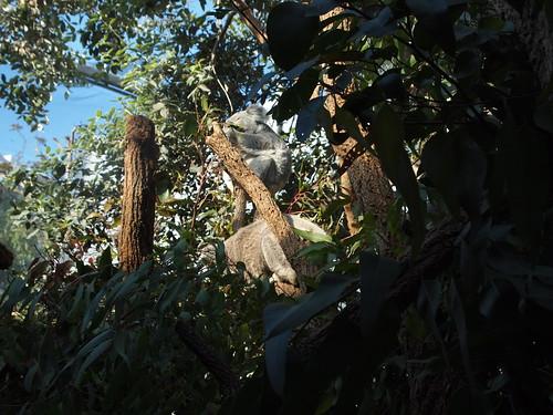 P9146532 WILD LIFE SYDNEY ZOO シドニー動物園