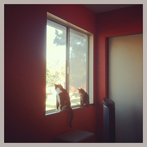 Two kitties share a window.