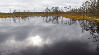 Dark Reflection of Sky on a Bog