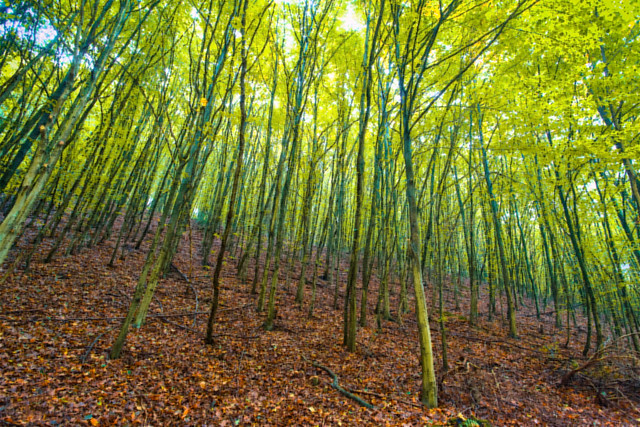 woodland seasons