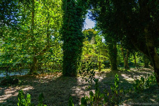 Paseo de arbustos de Boj