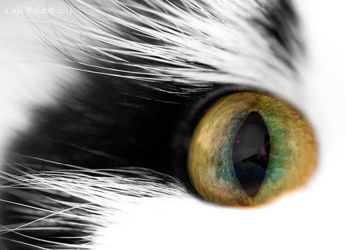 Cat's Eye by cpallot1