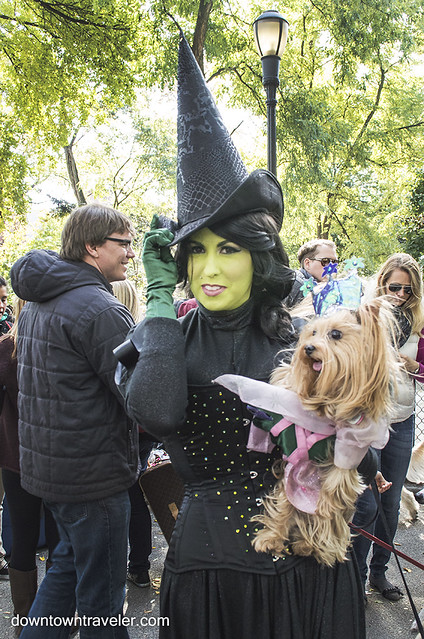 Halloween Dog Costume_Wicked_Glinda and Elphaba_Yorkie