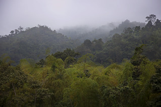 Cloud forest in Ayampe, Ecuador