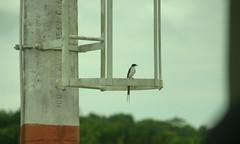 Bird waiting at the airport