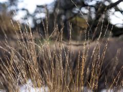 Sustainsville 2013: Lightness of reeds