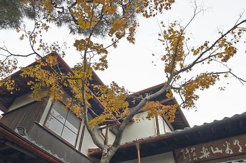 【写真】2013 紅葉 : 白沙村荘/2020-12-28/IMGP3720