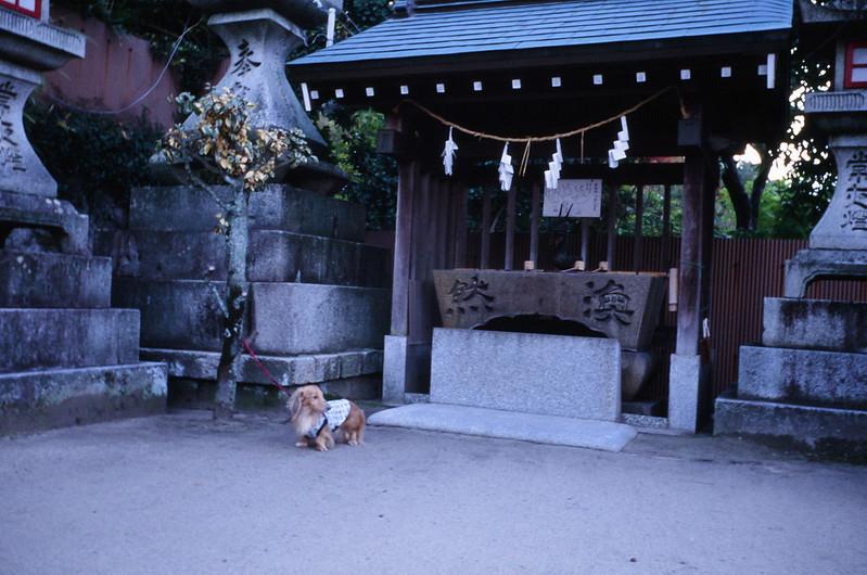 Shiinoo hachimangu